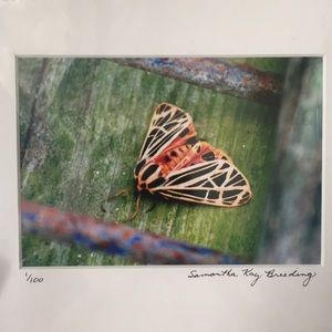 Tiger Moth Photograph Signed & Numbered